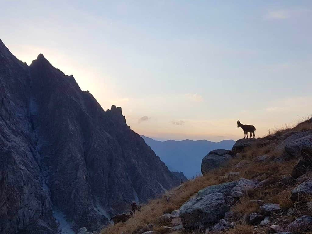 Wild life and stunning landscapes